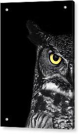 Great Horned Owl Photo Acrylic Print by Stephanie McDowell
