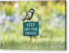 Great Tit On A Keep Off The Grass Sign Acrylic Print by Tim Gainey