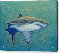 Great White Acrylic Print by Nathan Ledyard