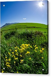 Green Acres Acrylic Print by Aaron S Bedell