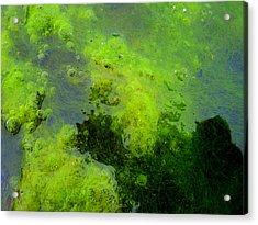 Green Algae Acrylic Print by Salman Ravish
