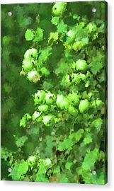 Green Apple On A Branch Acrylic Print by Toppart Sweden