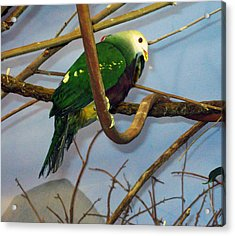 Green Bird Acrylic Print by Larry Stolle