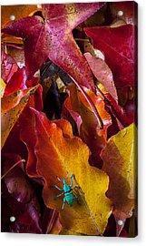 Green Bug Acrylic Print by Garry Gay
