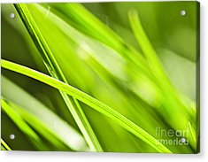 Green Grass Abstract Acrylic Print by Elena Elisseeva