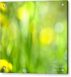 Green Grass With Yellow Flowers Abstract Acrylic Print by Elena Elisseeva