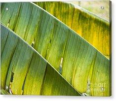 Green Leaves Series 14 Acrylic Print by Heiko Koehrer-Wagner