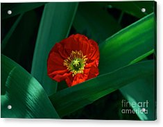 Green Loves Red Loves Green Acrylic Print by Byron Varvarigos