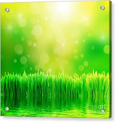 Green Nature Background With Fresh Grass Acrylic Print by Michal Bednarek