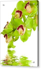 Green Orchid Acrylic Print by Boon Mee