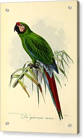 Green Parrot Acrylic Print by J G Keulemans