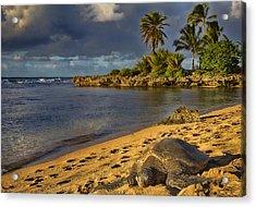 Green Sea Turtle At Sunset Acrylic Print by Douglas Barnard