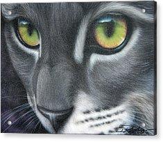 Grey Lady Acrylic Print by Darren Robinson