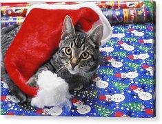 Grey Tabby Cat With Santa Claus Hat Acrylic Print by Thomas Kitchin & Victoria Hurst