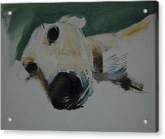 Greyhound, 2009 Oil On Paper Acrylic Print by Sally Muir