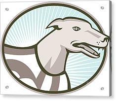 Greyhound Dog Head Retro Acrylic Print by Aloysius Patrimonio
