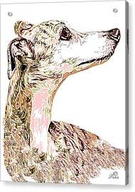 Greyhound Earnest Acrylic Print by Dalon Ryan