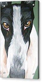 Greyhound Eyes Acrylic Print by Leslie Manley