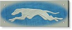 Greyhound II Acrylic Print by Sandy Keeton