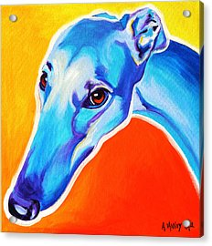 Greyhound - Lizzie Acrylic Print by Alicia VanNoy Call