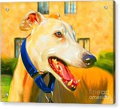 Greyhound Painting Acrylic Print by Iain McDonald