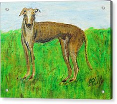 Greyhound Posing Acrylic Print by Lucille  Valentino