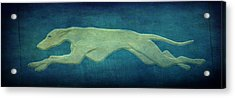 Greyhound Acrylic Print by Sandy Keeton