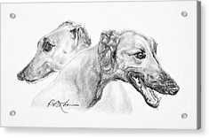 Greyhounds For Two Acrylic Print by Roy Anthony Kaelin