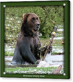 Grizzly Bear 07 Acrylic Print by Thomas Woolworth