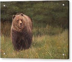 Grizzly Acrylic Print by David Stribbling