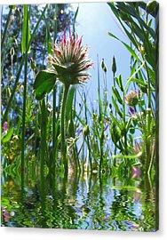 Ground Level Flora Acrylic Print by Joyce Dickens
