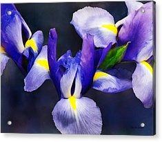 Group Of Japanese Irises Acrylic Print by Susan Savad