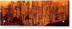 Grove Of Alder Trees In Humboldt Acrylic Print by Panoramic Images