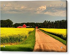 Growing For Gold Acrylic Print by Larry Trupp