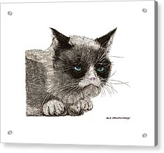Grumpy Pussy Cat Acrylic Print by Jack Pumphrey