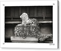 Guardian In Black And White Acrylic Print by Brenda Bryant