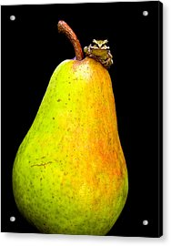 Guest A-pear-ance Acrylic Print by Jean Noren