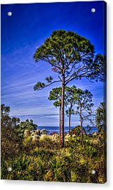 Gulf Pines Acrylic Print by Marvin Spates