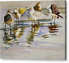 Gull Family Acrylic Print by Julianne Felton