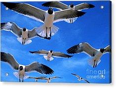 Gulls In Flight Acrylic Print by Geoge Ranalli