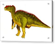 Hadrosaurus Acrylic Print by Michael Vigliotti