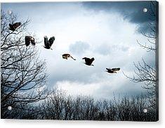 Half Second Of Flight Acrylic Print by Bob Orsillo
