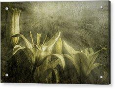 Halleluiah Acrylic Print by Diane Schuster