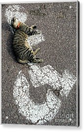 Handicat Parking Acrylic Print by Barbie Corbett-Newmin