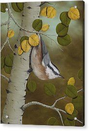 Hanging Around-red Breasted Nuthatch Acrylic Print by Rick Bainbridge