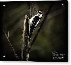 Hanging Out Acrylic Print by Cris Hayes