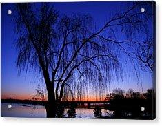 Hanging Tree Sunrise Acrylic Print by Metro DC Photography