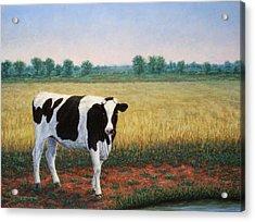 Happy Holstein Acrylic Print by James W Johnson
