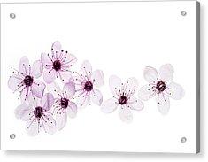 Happy Spring Acrylic Print by Rebecca Cozart