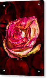 Happy Valentine's Day - 1 Acrylic Print by Alexander Senin